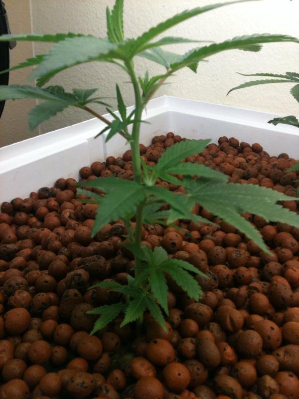 Plant D 20100718