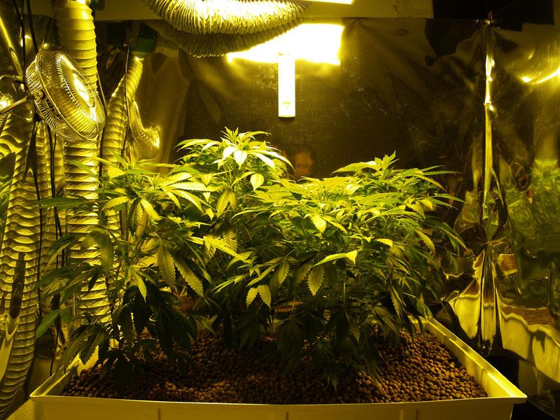 Grow Room 20100821