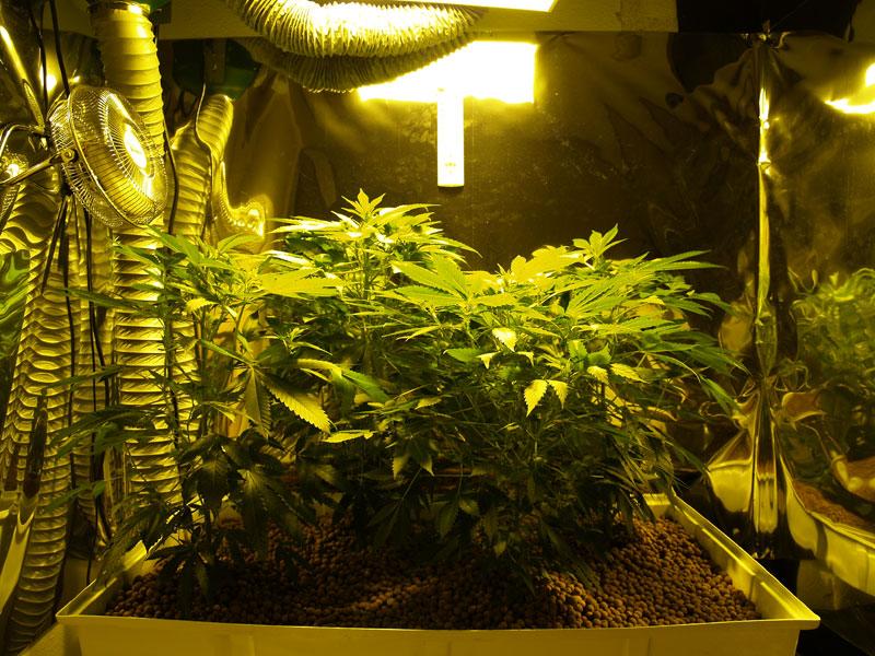 Grow Room 20100822