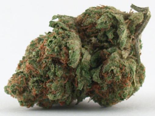 Cherry OG Kush