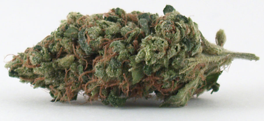 Headband from Green Crop Co-Op