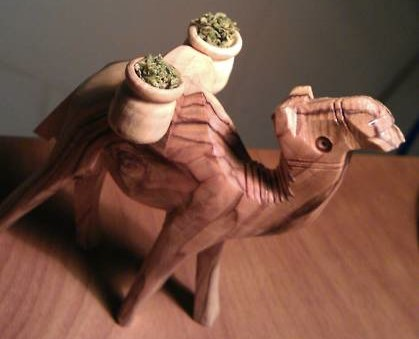 Camel Weed